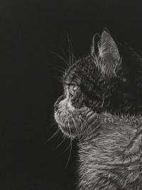 kleurpotlood op zwart papier - Louise Plomp-De Gooijer (oud-leerling)