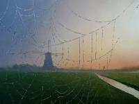 olieverf op paneel - Piet Houtenbos